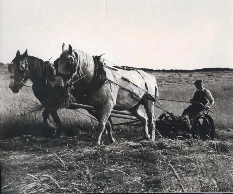 Fred Handford plough Ball Beard Farm
