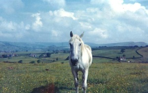 Horse, New Mills, Fred Handford